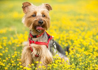 puppy dog training narre warren pakenham