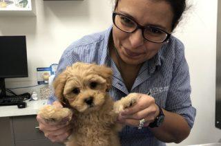 puppyhealth check