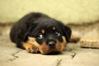 dog puppy black fur