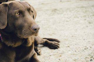 vet 00007 dog clinic
