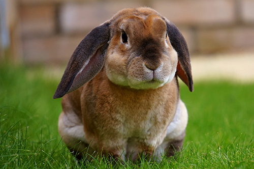 rabbit veterinary consultation melbourne