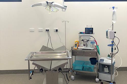 dog cat pet hospital vet surgery