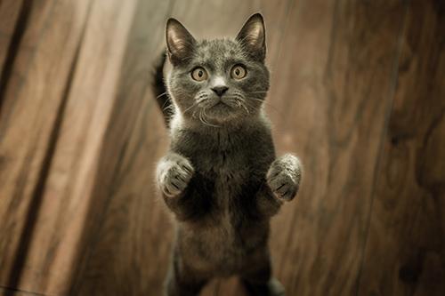 cat veterinarian cranbourne berwick clyde