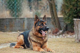 animal animal photography dog083 dog clinic