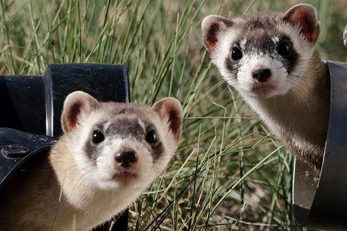 ferret veterinary care clyde cranbourne berwick