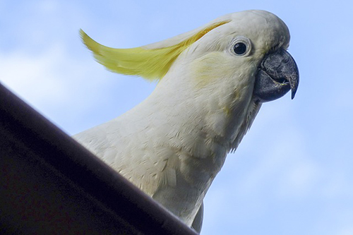 cockatoo bird veterinarian