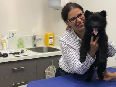 dr irene mitry treating small dog