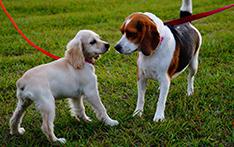 puppy training school officer narre warren