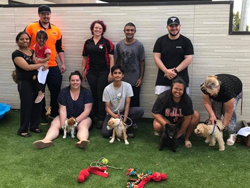 puppy training school clyde cranbourne berwick narre warren