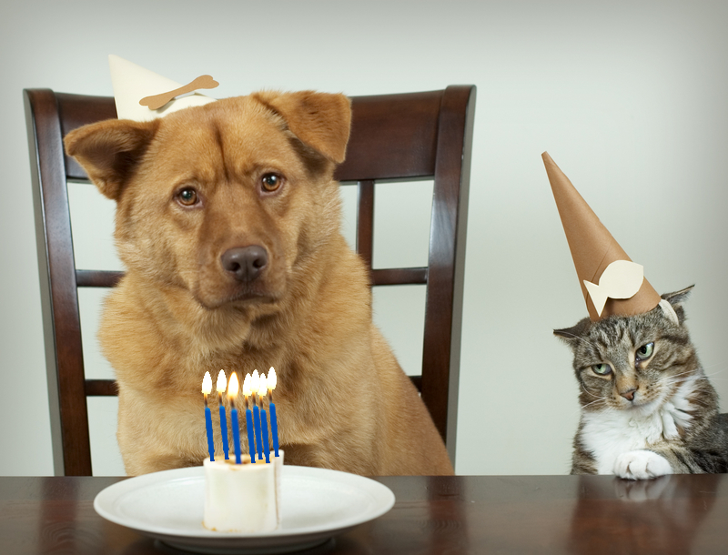 elderly senior dog cat birthday