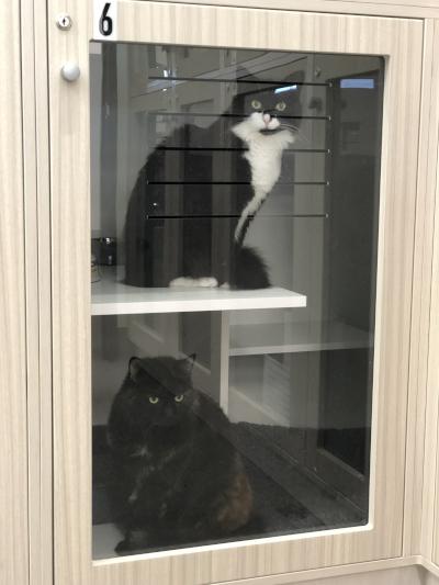 kitties in condo boarding