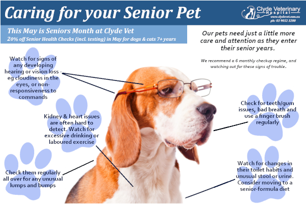 care for senior pet getting older
