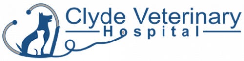 clyde veterinary hospital for dogs and cats in casey