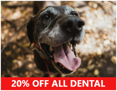 discount veterinary dental dog casey