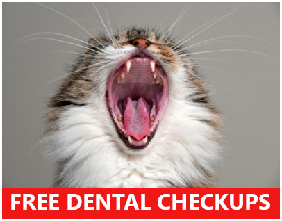 free veterinary dental checkups cat