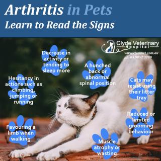 arthritis osteoarthritis dogs cats signs symptoms