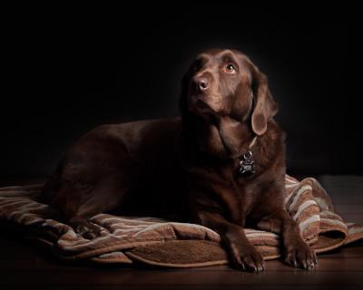 dog_bed_arthritis.jpg
