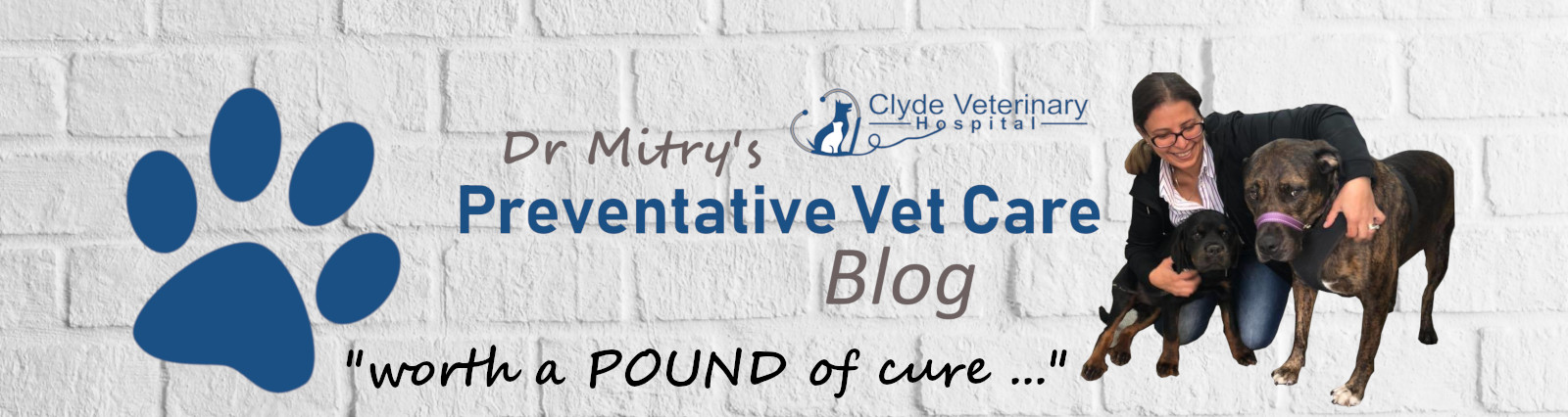 preventative veterinary care blog for dogs and cats