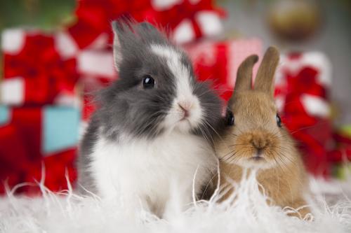 rabbits christmas santa present