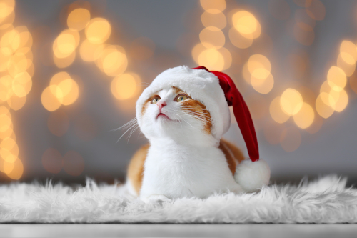 cat christmas santa hat