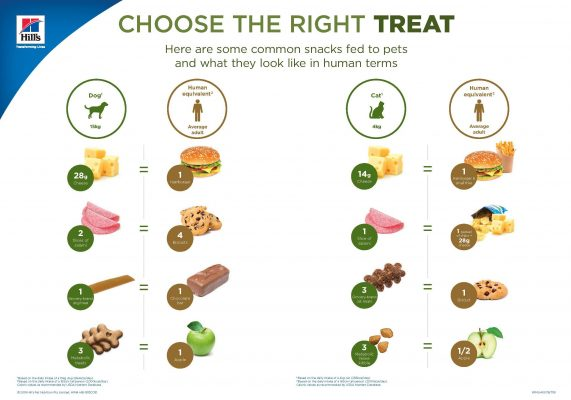 choosing right treat food dogs