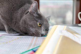 new cat rubbing scent marking