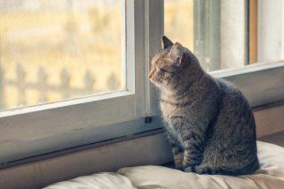 new cat home window