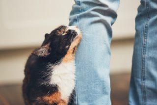 cat rub man leg