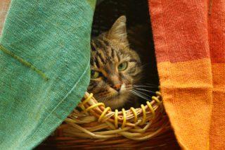 new cat kitten basket home