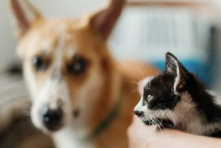 new dog and cat introduction