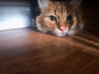 new cat hiding home