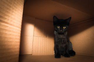 new cat kitten box