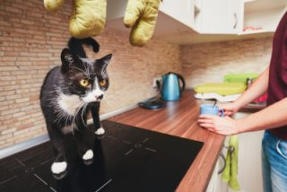 kitten new home bench