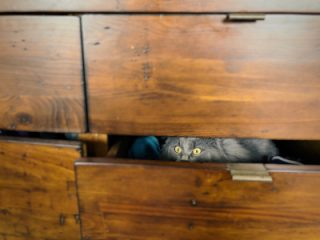 cat hiding drawers in new home