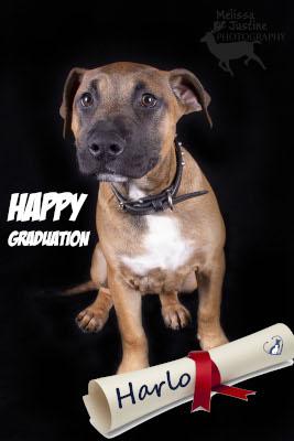 puppy scgool graduate