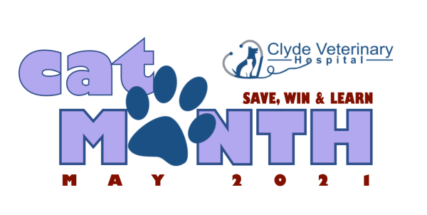 cat month vet clyde cranbourne