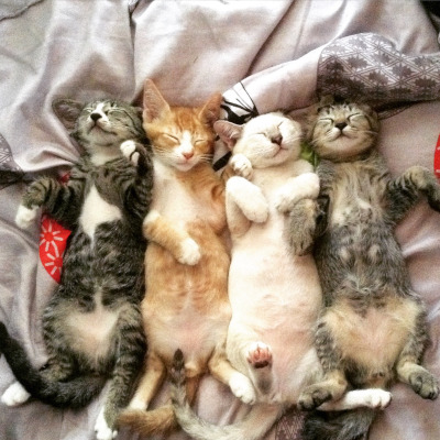 catsleepinging 400 vets