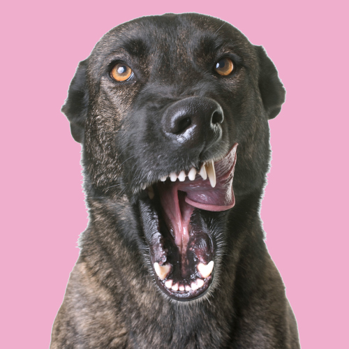 blackdog sqr blank vets